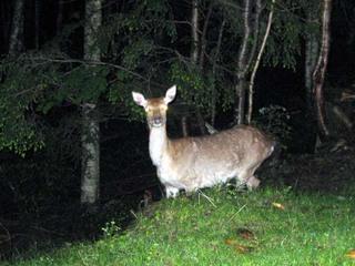 大弛の鹿.jpg